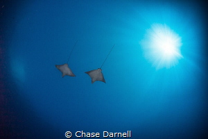 """""""Friends Fly Together"""" Flying out into the blue accompan... by Chase Darnell"""