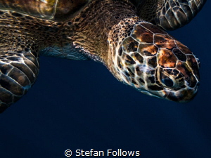 Exit Buddy ... Koh Similan, Thailand. Canon G10-f4-1100-i... by Stefan Follows