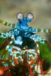 Colorful encounter by Raoul Caprez