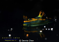 Reflection Tambja sp by Dennis Chen