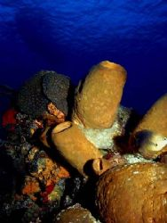 Sponges and soft corals at the top of the reef, the photo... by Steven Anderson