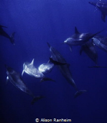 Come back dolphin friends! by Alison Ranheim