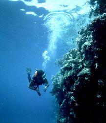 'ON the WALL'. Ngemelis wall, Palau: Eastern Caroline Isl... by Rick Tegeler