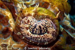 Eye of a crocodile fish by Joachim Neumann