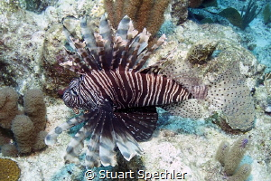 A beautiful intruder in the Caribbean. by Stuart Spechler