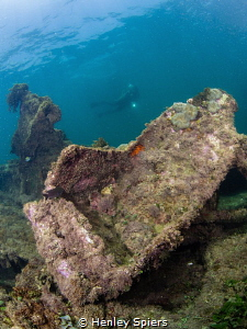 Discovering the wreckage of an old WWII American fighter ... by Henley Spiers