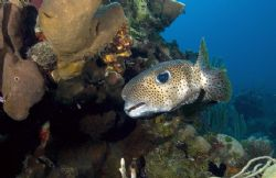 Puffer coming around the bend. by Andy Lerner