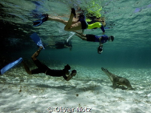 Funny scene, 4 snorkeler meeting a female sea lion. by Olivier Notz