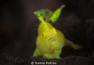 Cute froggy by Nonna Pokras