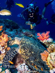diver filming turtle taken woodhouse reef sharm by Mark Hedges