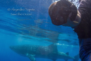 Selfie with Whale Shark, Isla Contoy México by Alejandro Topete