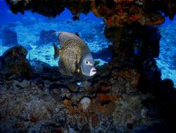This photo was taken in Cozumel in Dec of 2005, there wer... by Steven Anderson
