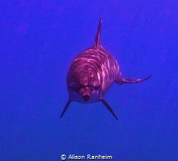 Dolphin swim nap! by Alison Ranheim