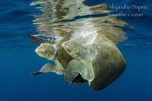 Turtles in Love, Puerto Vallarta México by Alejandro Topete