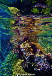 Captain Cook's Bay, Hawaii by Alison Ranheim