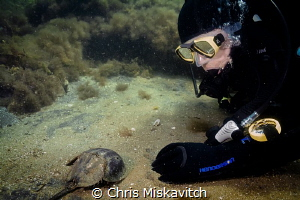 Diver paused for a minute to say hello to a Horseshoe Cra... by Chris Miskavitch