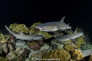 Mini Frenzy