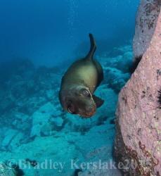 He was just so cute! Nsw south coast  Nikon d7100 by Bradley Kerslake