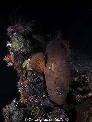 This is Night Dive at Liberty Wreck, Tulamben, Bali, Indo... by Eng Guan Goh