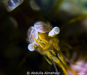 Squat Shrimp by Abdulla Almehairi