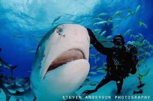 Let's see those teeth! by Steven Anderson