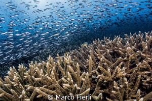 Endless Stream 5062x3375 by Marco Fierli
