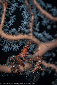 """""""In the Branches"""" This Decorator Crab really blends in w... by Dusty Norman"""