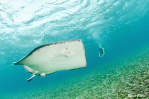 Stingray encounter by Raoul Caprez
