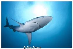 Shark enjoying the sun... by Gino Symus