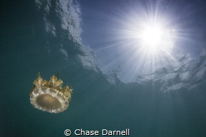 """""""Suspended"""" A Jelly Fish suspended in water and light rays. by Chase Darnell"""