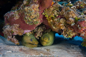"""""""Two Heads Are Better Than One!""""- I found a coral head wi... by Susannah H. Snowden-Smith"""