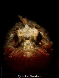 Whiteface Waspfish....why so grumpy!? by Luke Gordon