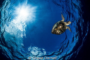 """""""Aerials"""" The Turtle dive always leads to awesome imager... by Chase Darnell"""