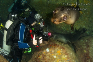 Sea Lion and Divers, La Paz Mexico  by Alejandro Topete