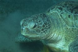 This was a very friendly turtle we met last November in M... by Barny Shergold