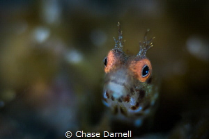 """""""Fuzzy"""" I wanted to emphasize the bright color eyes of t... by Chase Darnell"""