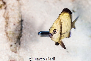 An Awkward Moment 3061x2041 by Marco Fierli