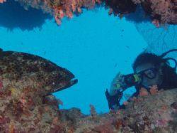 Salomie and grouper taken at Ras Mohamed, Sinai with Olym... by Nikki Van Veelen