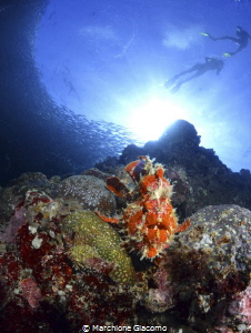 Moal Boal .Panagsama reef Snorkeling Nikon D800E, 10,5m... by Marchione Giacomo