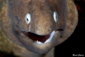 Curious smile by Raoul Caprez
