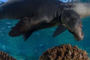 Sea Lion close to me, La Paz México by Alejandro Topete