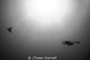 """""""The Chase"""" Encounters like this is why we dive the Nort... by Chase Darnell"""