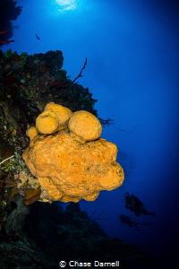 """""""Orange Escape"""" An Orange Elephant Ear Sponge down the w... by Chase Darnell"""