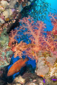 The Red Sea Nikon D800 SIgma 15mm Nauticam DSYS1's x 2 by Spencer Burrows