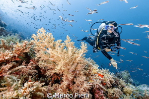 Swarming Convicts and Diver 5760x3840 by Marco Fierli