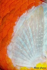 Artistic fin by Raoul Caprez