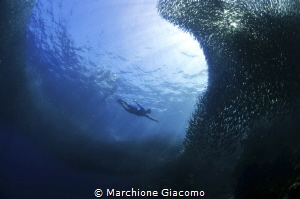 The fly. sardines in Moal Boal Nikon d800E, 10,5mm.No st... by Marchione Giacomo