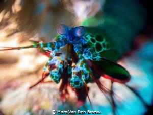 fast colours by Marc Van Den Broeck