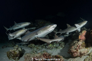 Let's Go This Way!