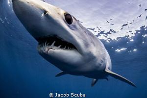 Dramatic close up! by Jacob Scuba